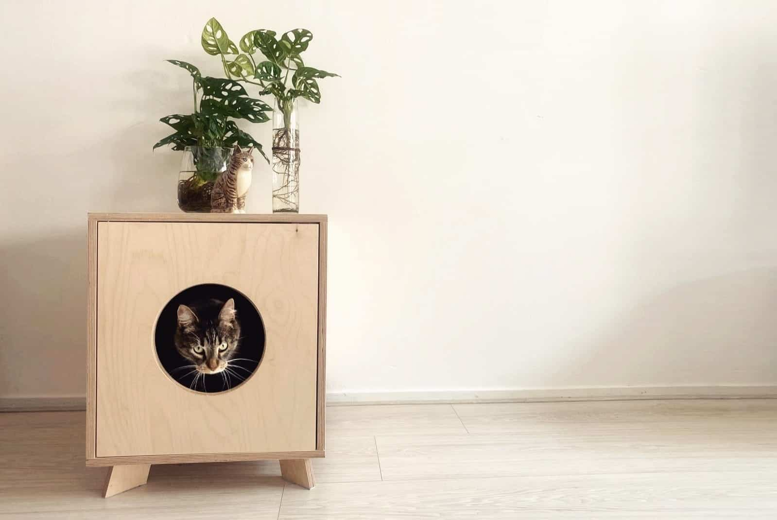 Build An Outdoor Cat Kennel And Condo For Your Indoor Cat Catandwood
